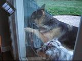 2005-06-14.dog_doorbell.video.320x240-2.7meg.livonia.mi.us.avi