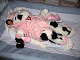 2006-02-06.humor.baby_cow_outfit.2.livonia.mi.us.jpg