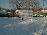 1999-01-17.schone.winter.backyard.3.redford.mi.us.jpg