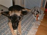 2003-00-00.reisa-sidnee.chews.1.fav.redford.mi.us.jpg