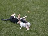 2003-00-00.reisa-sidnee.playing.06.fav.redford.mi.us.jpg