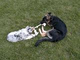 2003-00-00.reisa-sidnee.playing.rope.2.fav.redford.mi.us.jpg