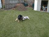 2003-00-00.reisa-sidnee.playing.stick.1.redford.mi.us.jpg