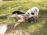 2003-00-00.reisa-sidnee.playing.stick.2.redford.mi.us.jpg