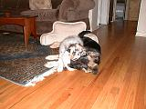 2003-00-00.reisa-sidnee.sharing.bear.toy.1.redford.mi.us.jpg