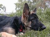 2003-00-00.reisa.head_shot.grass.2.redford.mi.us.jpg