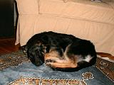 2003-00-00.reisa.sleeping.1.redford.mi.us.jpg