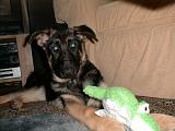 2003-00-00.reisa.toy.green.1.fav.redford.mi.us.jpg