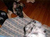 2003-00-00.reisa.wanting.sidnee.chew.1.redford.mi.us.jpg