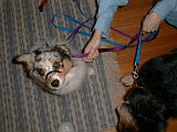 2003-00-00.sidnee.head_shot.leash.1.redford.mi.us.jpg