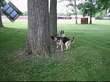 2005-06-18.reisa-sidnee.treed_a_squirrel.2.video.320x240-9.8meg.livonia.mi.us.avi