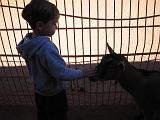 2006-10-24.petting_zoo.matthew.1.animal_kingdom.orlando.fl.us.jpg