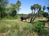 2006-10-24.safari.3.animal_kingdom.orlando.fl.us.jpg