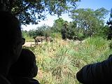 2006-10-24.safari.4.animal_kingdom.orlando.fl.us.jpg