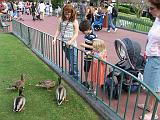 2007-12-23.feeding.ducks.01.seren-snyder.magic_kingdom.disney.orlando.fl.us.jpg