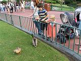 2007-12-23.feeding.ducks.03.seren-snyder.magic_kingdom.disney.orlando.fl.us.jpg