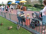 2007-12-23.feeding.ducks.04.seren-snyder.magic_kingdom.disney.orlando.fl.us.jpg