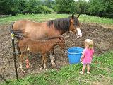 2008-07-04.deer_run_stables.13.seren-snyder.richmond.ky.us.jpg