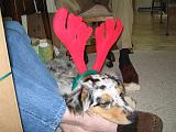 2003-12-25.reindeer.antlers.sidnee.christmas.bel_air.md.us.jpg
