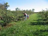 2007-10-09.farm.orchard.apple.15.seren-snyder-sandy.plymouth.mi.us.jpg