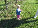 2007-10-09.farm.orchard.apple.16.seren-snyder-sandy.plymouth.mi.us.jpg