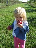 2007-10-09.farm.orchard.apple.18.seren-snyder-sandy.plymouth.mi.us.jpg