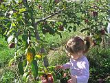 2007-10-09.farm.orchard.apple.21.alex.plymouth.mi.us.jpg