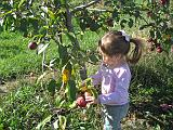 2007-10-09.farm.orchard.apple.22.alex.plymouth.mi.us.jpg