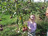 2007-10-09.farm.orchard.apple.23.alex.plymouth.mi.us.jpg