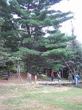 2005-08-21.dead_tree.cutting.down.5b.felled.lake_cabin.cook.mn.us.jpg