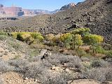 2007-11-17.canyon_return_ascent.bright_angel_trail.014.grand_canyon.az.us.jpg
