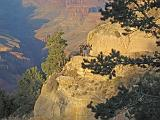 2007-11-17.canyon_return_ascent.bright_angel_trail.133.grand_canyon.az.us.jpg