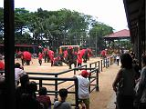 2004-07-10.tropical_gardens.elephant_show.4.fav.nong_nooch.th.jpg