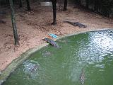 2004-07-11.sriracha_tiger_zoo.crocs.1.chon_buri.th.jpg