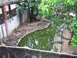 2004-07-11.sriracha_tiger_zoo.juvenile_crocs.1.fav.chon_buri.th.jpg