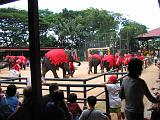 2004-07-10.tropical_gardens.elephant_show.2.nong_nooch.th.jpg