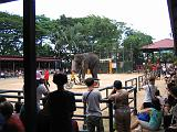 2004-07-10.tropical_gardens.elephant_show.5b.nong_nooch.th.jpg